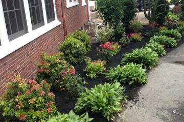 Tree & Garden Care